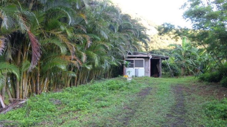 2010年6月 焙煎小屋設置